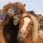 Stupid-looking horses