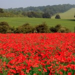 In Flanders Fields, as they look today