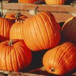 """""""The Pumpkin"""""""