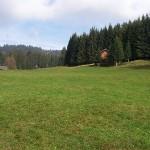 Vorarlberg meadow