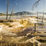 Yellowstone's hot springs, and the virtue of viruses