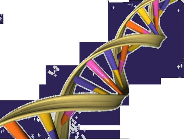 A DNA spiral