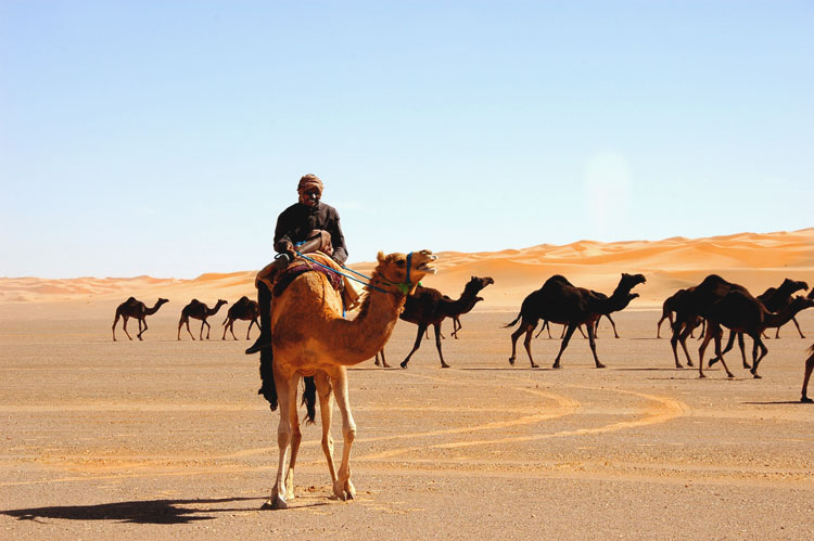 In Arabia, with camels