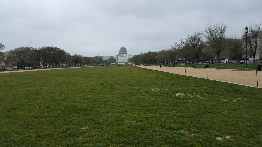 The grass is greener this side of the Capitol. Photo D. Rupert