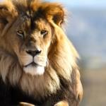 Atlas Shrugged: The Lion's Share