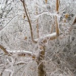 IcyBranches2