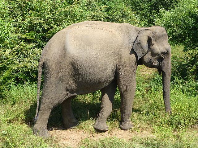 elephant man essay