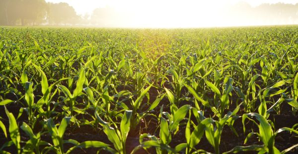 Ethanol Industry Pleased with EPA Proposed Rule on RVOs