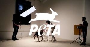 peta-600x315