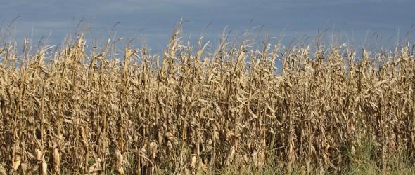 Autumn's lingering death