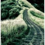 pathway-^riza^