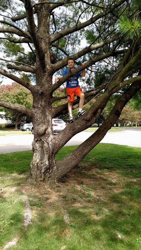 ben climbing tree