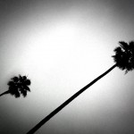 noir palms june gloom