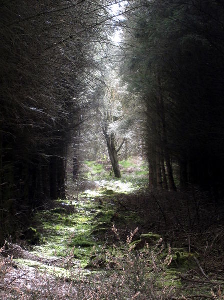 Description English: Light in the forest A shaft of sunlight through the dark forest of Coed Moel Famau highlights a single tree. Date 8 April 2009 Source From geograph.org.uk Author John S Turner (CC BY-SA 2.0)