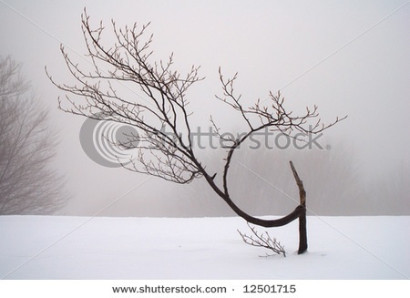 ellenpd.photo_.stock-photo-crooked-tree-in-fog-and-snow-12501715.jpg