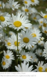 Revisiting the Daisies (Or, Why the Online World Isn't All Bad)