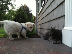 This is as close as Sunday and our cat, Stormy, have gotten so far. Sunday would love to play. Stormy is not interested.