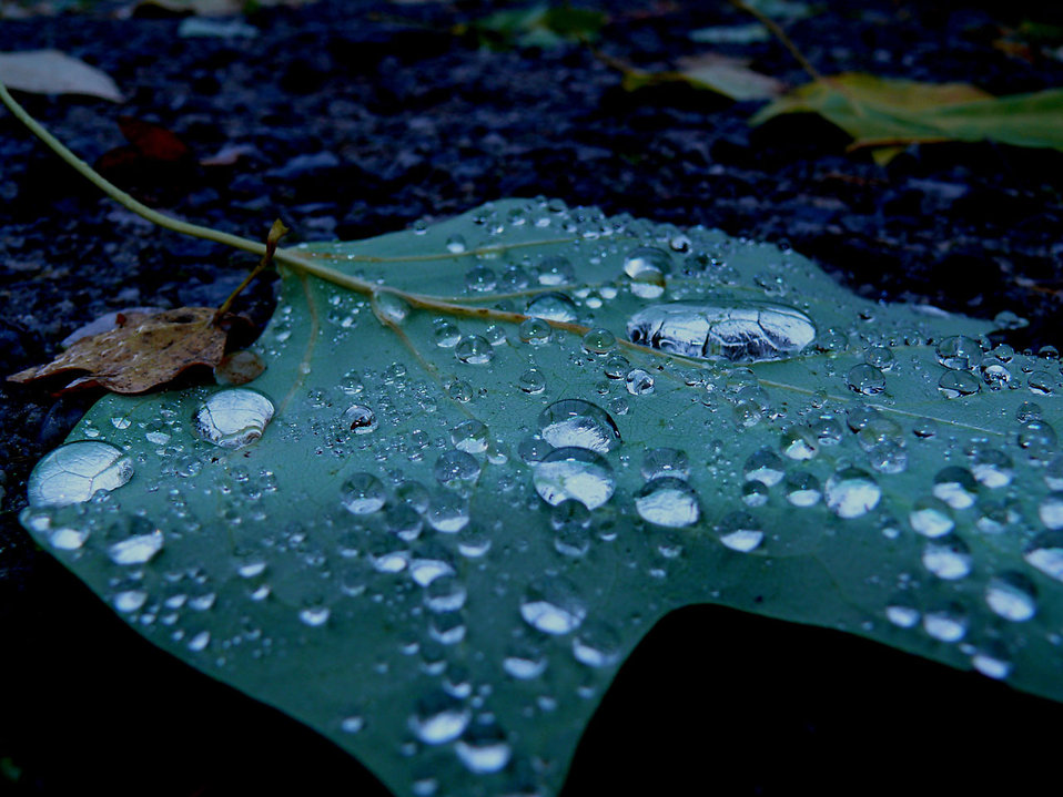 9226-drops-of-rain-on-a-leaf-pv