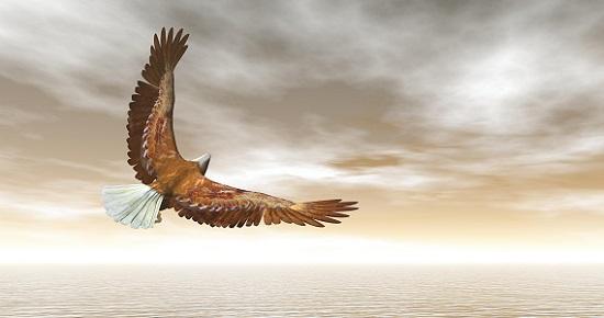 Hello Rumi Tuesday! To fly toward a secret sky...