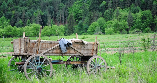 Wood wagon in the field