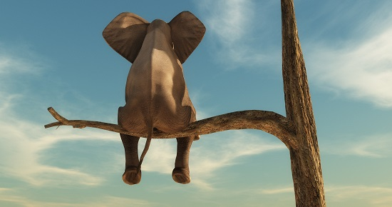 Elephant stands on thin branch of withered tree