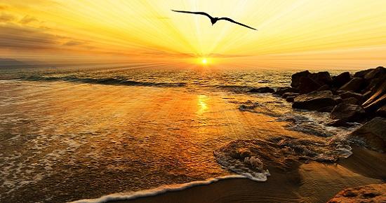 Ocean Sunset Bird Silhouette