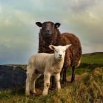 Shepherdess: On Nadia Bolz-Weber
