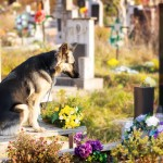 Are There Pets in Heaven?