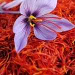 """I'm Just Mad About Saffron. And Saffron's Mad About…Treating Depression."" New Study Says."