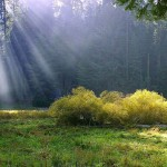 rays-on-the-meadow_w725_h544