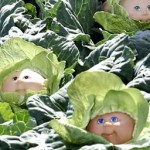 cabbage-patch-300x256