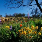 Wildflowers Start To Bloom In Area Ravaged By Wild Fires Last Year
