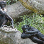 The Bonobo and The Creator