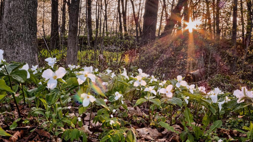 flowersforest