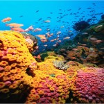 Healthy reef ecosystems foster amazing biodiversity