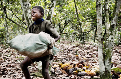 Cocoa-Child-Laborer