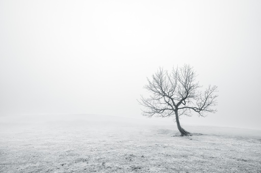 bare lonely tree with beautiful light and fog