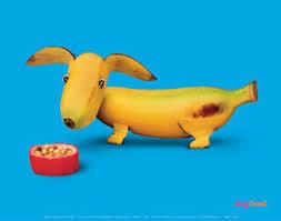 dachshund banana