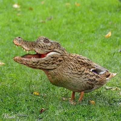 crocoduck.jpg
