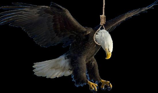 eagle2 copy