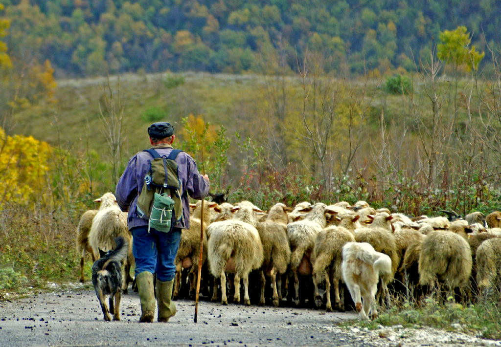 Shepherd, by Gianluca Carnicella. Flickr Commons.