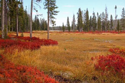 Vaccinium_autumn_colors,_Yellowstone,_Lewis_River_1
