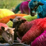 Holiday Survival as the Family's Psychedelic Sheep