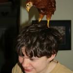 ChickenB