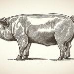 Pig Bones and Public Education