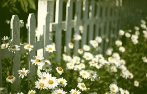 nastroeniya-cvety-cvetki