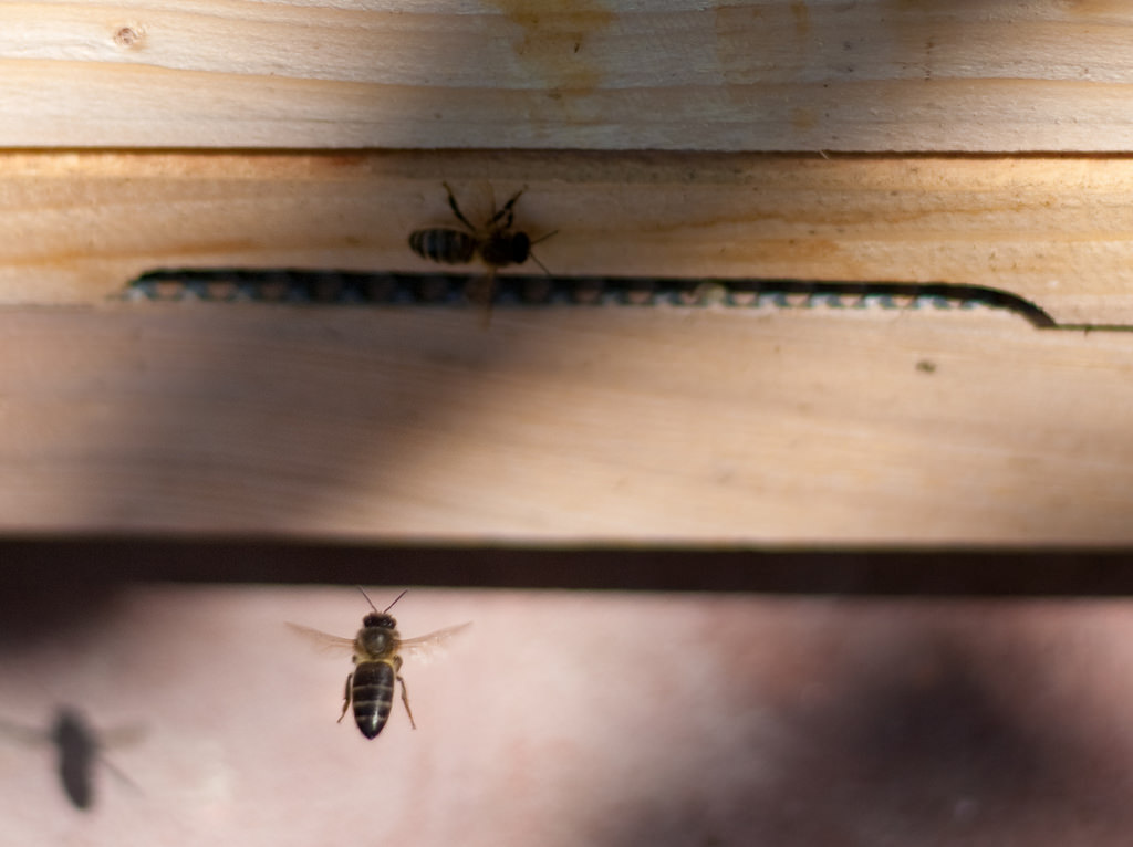 """Poetry Friday: """"Hive Boxes"""" by Megan Snyder-Camp"""