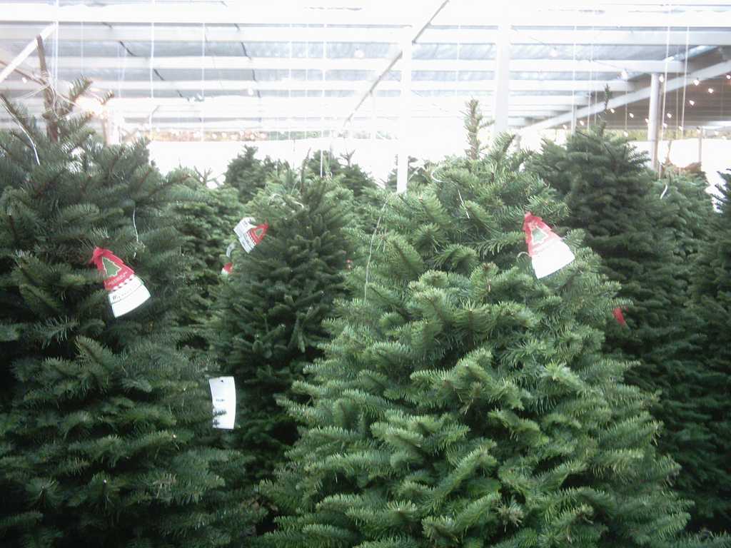 Christmas Tree Pass. Quincey Market Xmas Tree HDR Pano sm. jersey cow ...