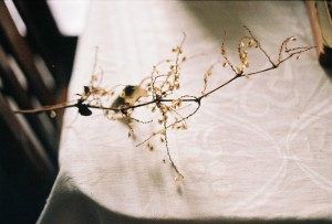 dying branch with tiny yellow leaves laid across a white table cloth in the afternoon.