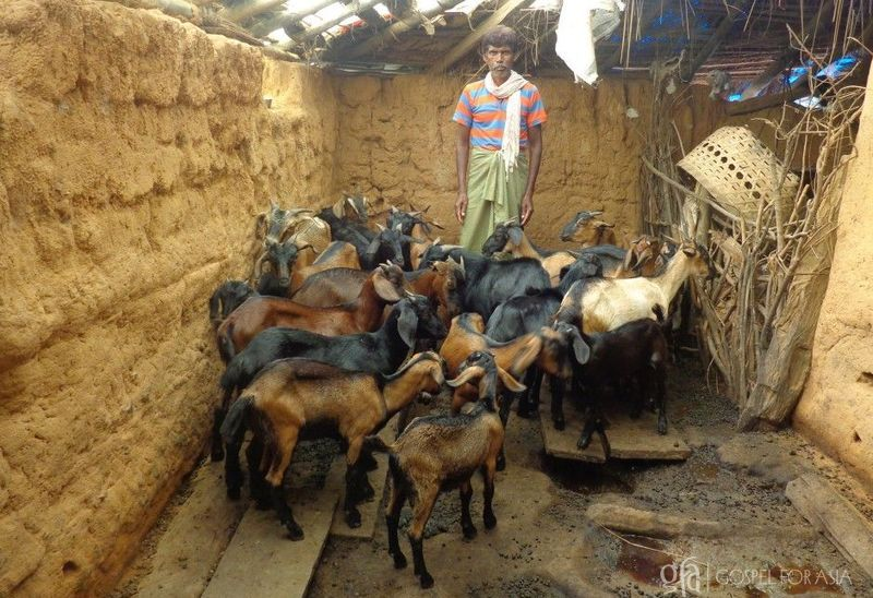 gospelforasia goats gifts for to eradicate poverty